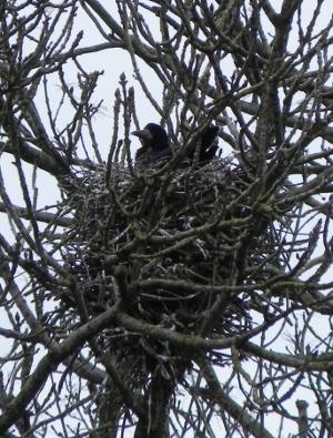 Crow's Nest?