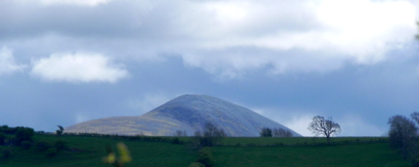 Skiddaw - with a coat of gorse