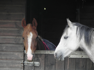 Two Horses
