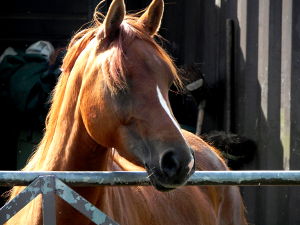 Horse At Gate