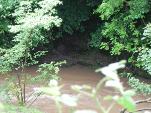 The River Bank-Full
