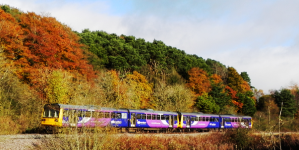Autumn Leaves And A Train