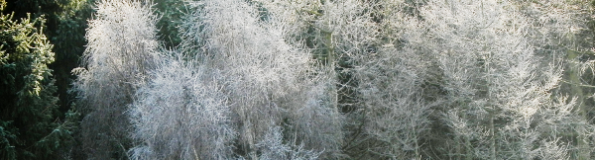 Frosty Filigree