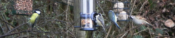 Birds At The Bird Feeder