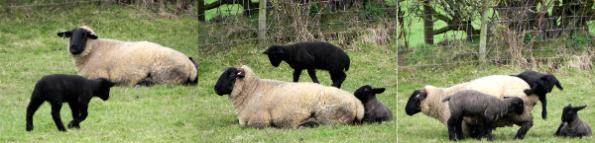 Lamb - Just Bored!