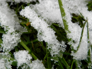 Grass, With A Snow Coat