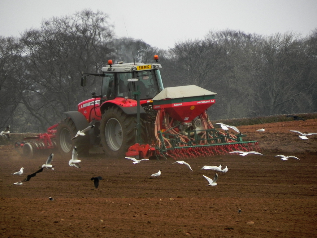 Tractor And Gulls