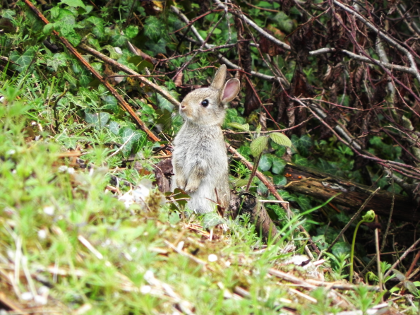 Rabbit By The Beck