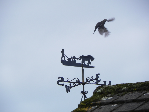 Blackbird on the Weathervane