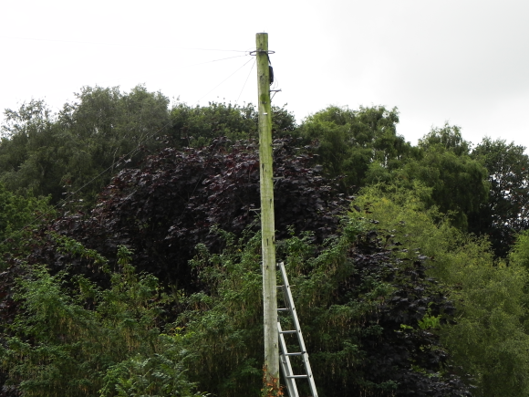New Wiring up the Telephone Pole