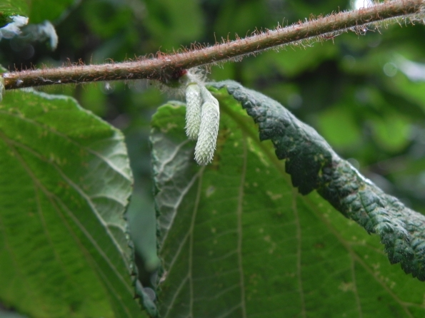 Hazel Catkins - Ahead of Schedule