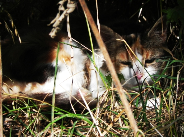 Cat In The Hedge