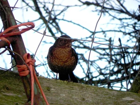 Blackbird - Well. Hello There!