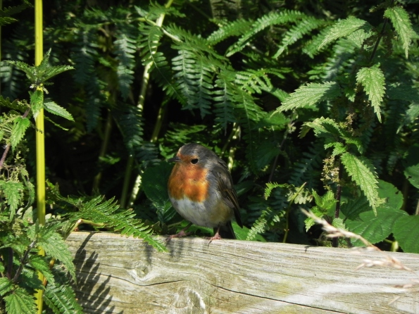 Robin By The Beck