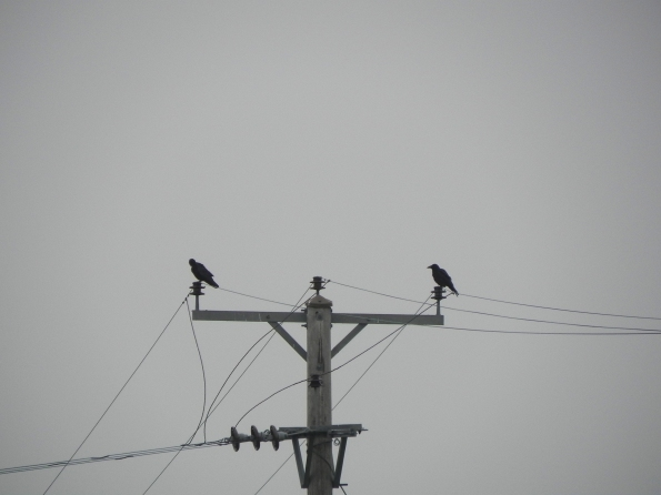 Two Rooks - Too Misty To Fly