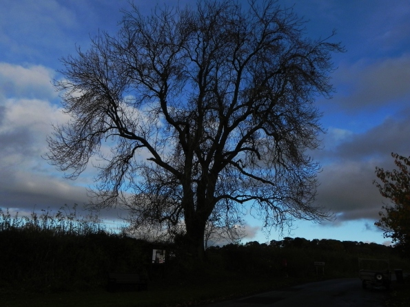 Ash Tree by the Village Green