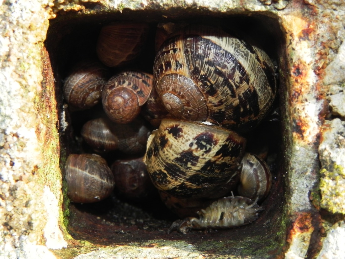 Snails In A Hole In A Concrete Post