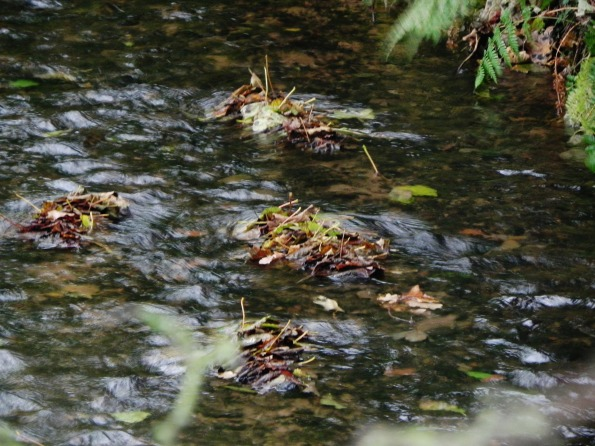 Duckalumps