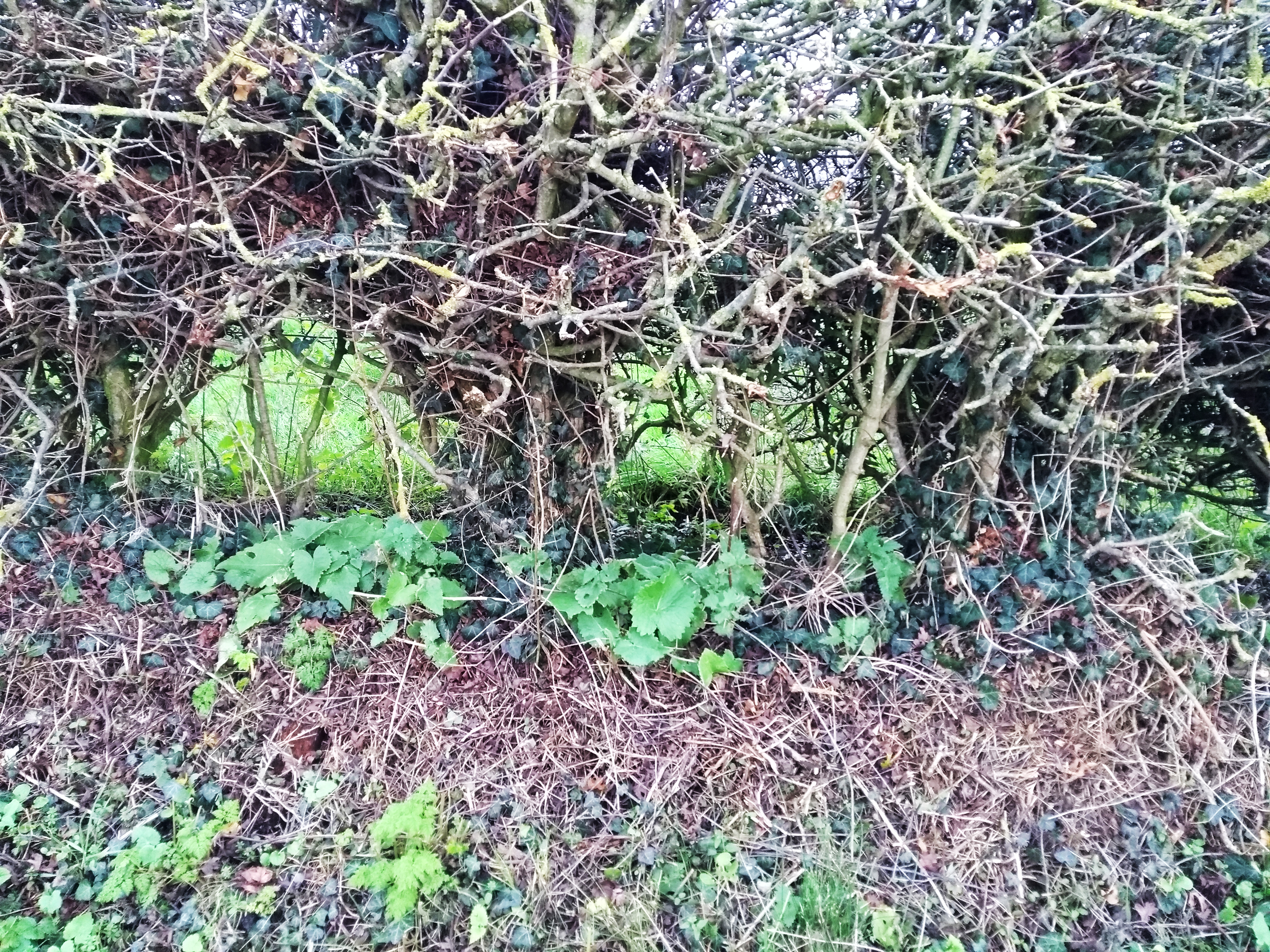 The Hole In The Hedge