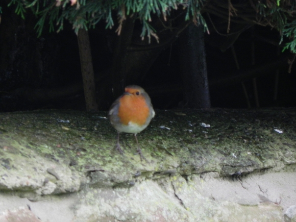Robin in the cave